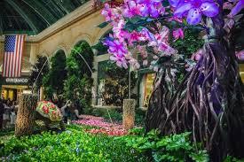 Bellagio Botanical Garden Bellagio Gardens Picture Of Bellagio Conservatory Botanical