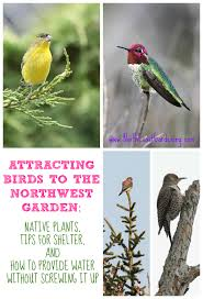 attracting birds to the northwest garden gardens to the and