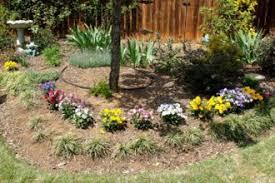 planting around trees