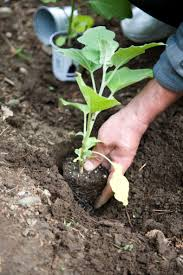 why is loam soil the best type of soil to grow plants hunker