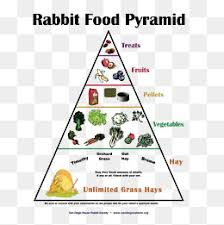 a healthy diet every day pyramid food pyramid a healthy diet