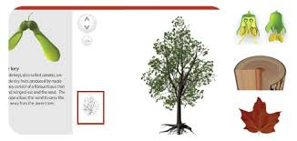 spongelab build a tree