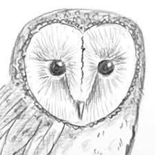 draw birds shoo rayner u2013 author