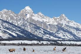 Wyoming travel management company images Wyoming american excursionist jpg