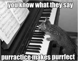 Cat Playing Piano Meme - 107 best cats images on pinterest kitty cats funny cats and