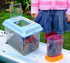 let the children play creating worm farms