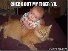 Check In Meme - check out my tiger yo funny nonsense meme picture