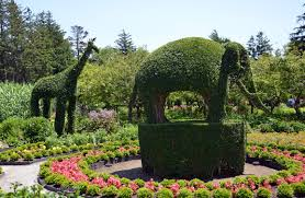 Urban Gardener Newport Beach Green Animals Topiary Garden Photo Tour And Guide