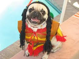 funny thanksgiving costumes top 15 pug halloween costumes what the pug http whatthepug