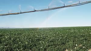 potato field irrigation montana usa hd stock video 766 270