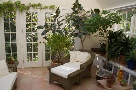 tips for keeping your indoor plants alive pure nutrients