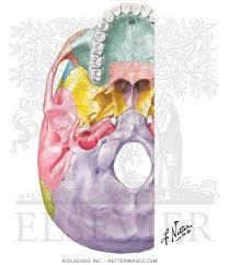 Base Of The Skull Anatomy Aspect Of Base Of Skull