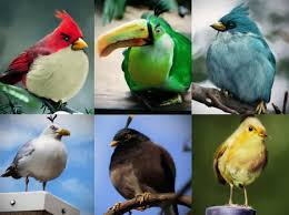 70 angry birds desktop wallpapers photo gallery ultimate