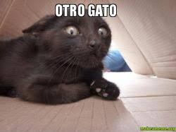 Gato Meme - otro gato make a meme