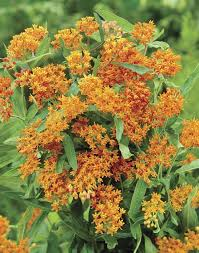 433 best butterfly garden images on pinterest butterfly flowers
