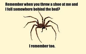 Afraid Of Spiders Meme - spider meme sharenator