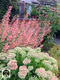 Late Blooming Perennials Best 25 Full Sun Plants Ideas On Pinterest Full Sun Landscaping