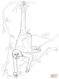 spider monkey coloring page free printable coloring pages