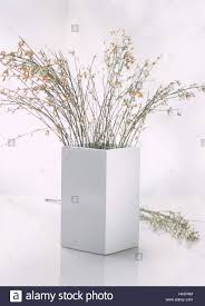 Branches In A Vase Vase Broom Branches Flower Vase Angular White Branches Stock
