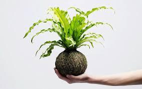 ornamental indoor plants indoor plant