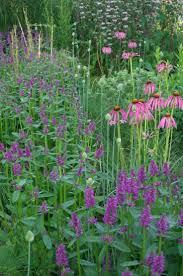 46 best fields of flowers images on pinterest flowers gardens