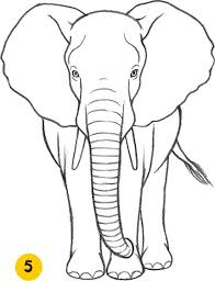 how to draw an elephant please also visit www