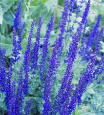 blue and purple flowers best shrubs with purple flowers