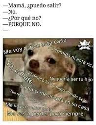 Memes De Chihuahua - memes de chihuahua blanco memes pics 2018