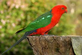i need some bird species help the endless forest