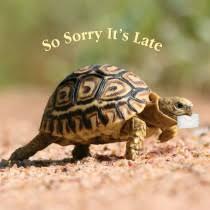 sorry it u0027s late birthday cards