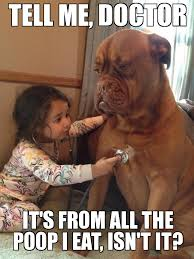 Dog Doctor Meme - distressed dog tell me doctor it s from all the poop i eat isn