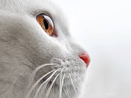 Are Dogs And Cats Color Blind Sudden Onset Blindness In Cats