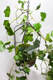 ivy hanging jewelled garden terrarium u2014 alyson mowat