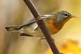 12 different types of bird migration