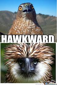 Hawkward Meme - rmx hawkward by spot meme center