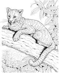 coloring pages jaguar