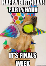 Funny Animal Birthday Memes - dog birthday meme