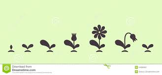 Foliage Flower - green vector flower stock photography image 4172392