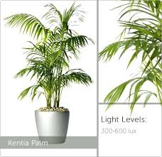 plants that need low light inspirational plants that need no light and low light plants palm 45