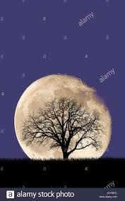 halloween tree background halloween haunted creepy tree night background as an old growth