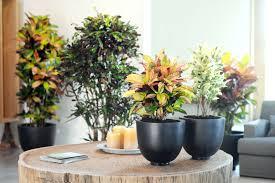 office plants green specialist