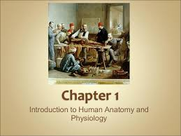 College Anatomy And Physiology Notes Anatomy And Physiology Introduction Chapter 1 Notes