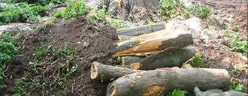 how to repair a damaged tree bark tree services maryland