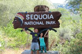 summiting alta peak in sequoia national park seeing the largest