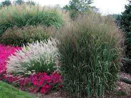 321 best garden grasses images on garden grass