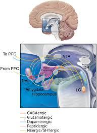 neurobiology of depression neuron
