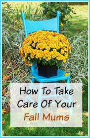 Fall Decorations For Outside The Home 2554 Best Fall Decorating Ideas Images On Pinterest Fall