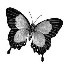 http etsy com listing 78466582 antique butterflies wall