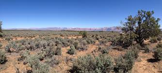 sonoran desert native plants the mojave dust bowl of 2014 u2013 causes and solutions erosion