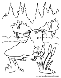 bathing moose coloring sheet create a printout or activity